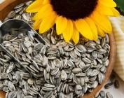 Можно ли поправиться или похудеть от семечек?