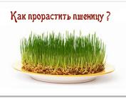 Пшеница пророщенная для похудения. Пища воительниц!
